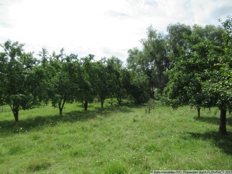 weitere Obstbäume