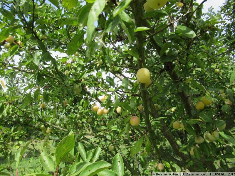 lecker Obst